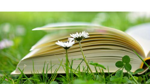 Diplom-Kinesiologie mit YESolution®